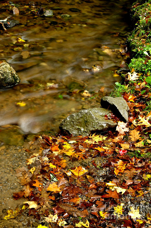 Monongahela National Forest Photograph - Fall Along Williams River by Thomas R Fletcher