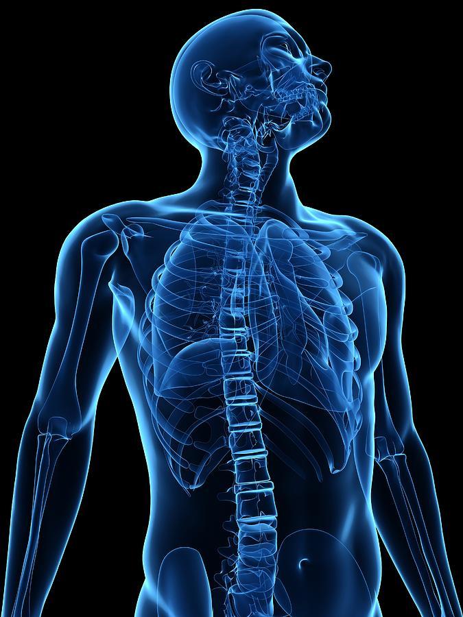 Artwork Photograph - Upper Body Bones, Artwork by Sciepro
