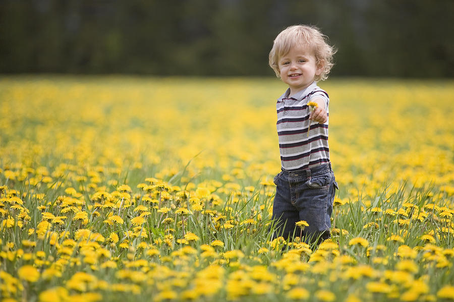 18 Month Old Boy In Dandelion Field Photograph By Susan