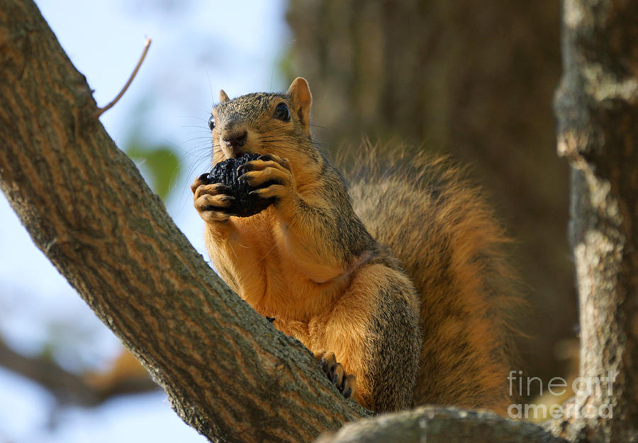 Birds Photograph - Squirrel by Lori Tordsen
