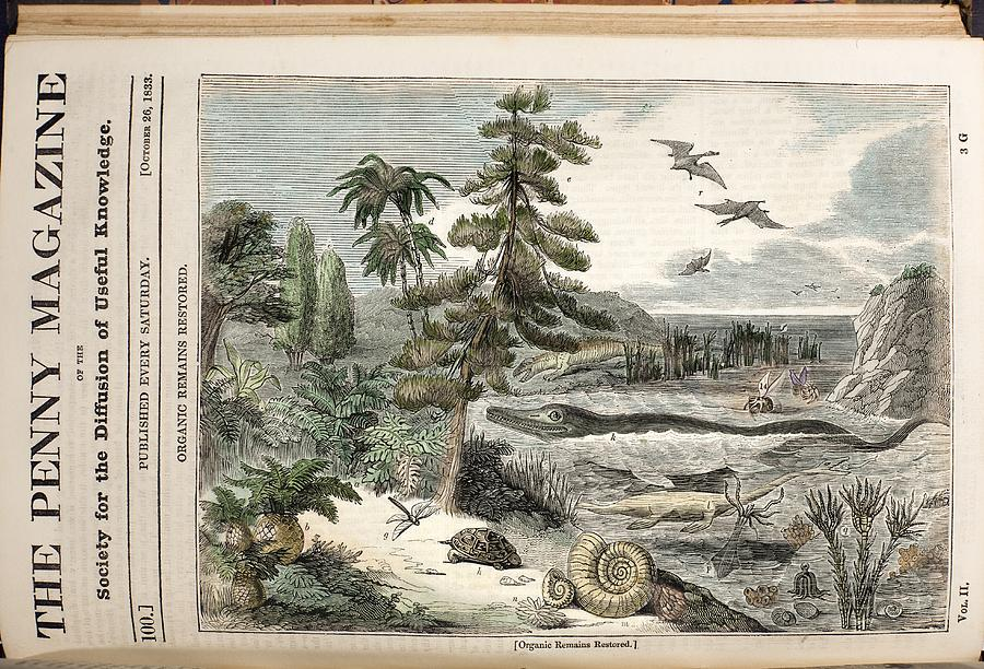 Ammonite Photograph - 1833 Penny Magazine Extinct Animals Color by Paul D Stewart