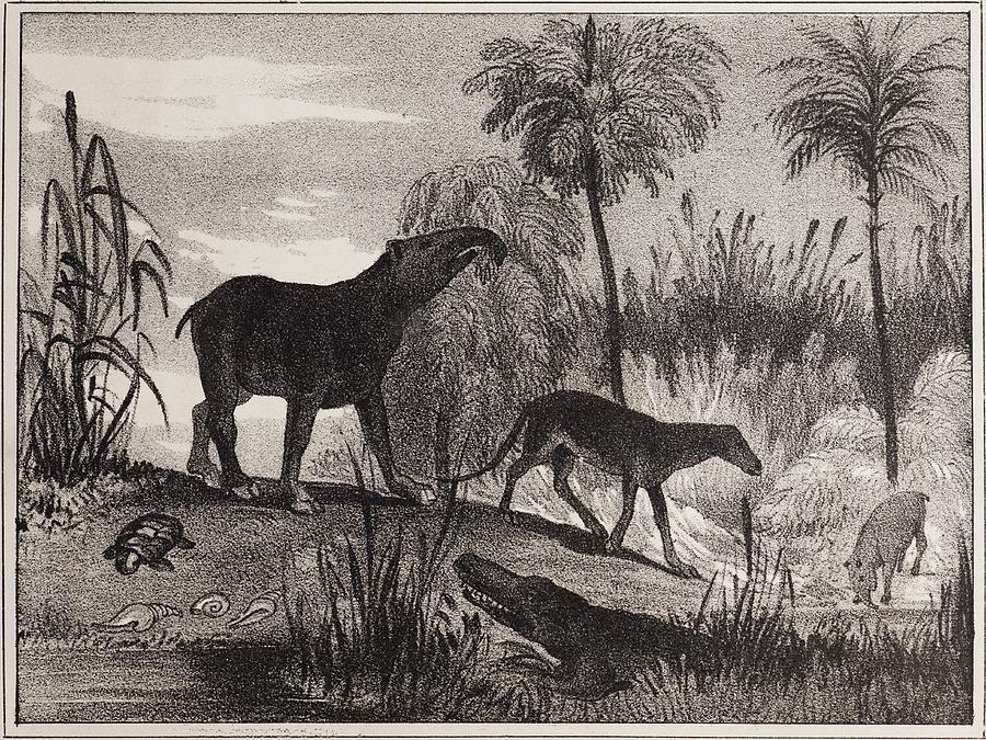 1837 Photograph - 1837 Extinct Prehistoric Animals Paris by Paul D Stewart