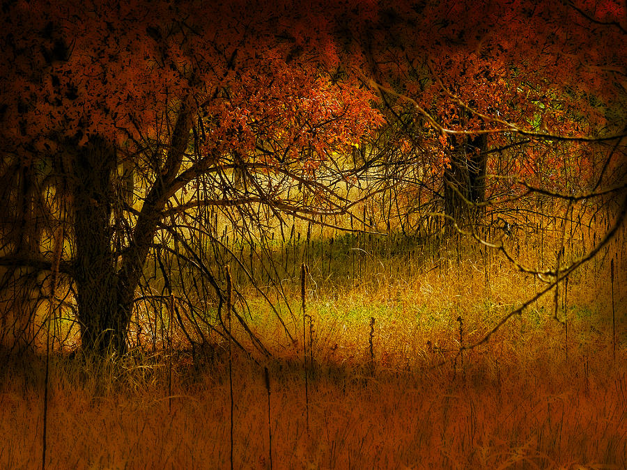 Landscape Photograph - 1969 by Peter Holme III