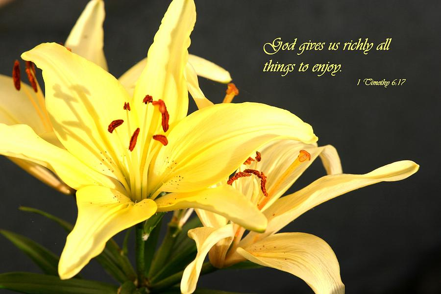Scripture Photograph - 1st Timothy Flower by Mike Lytle