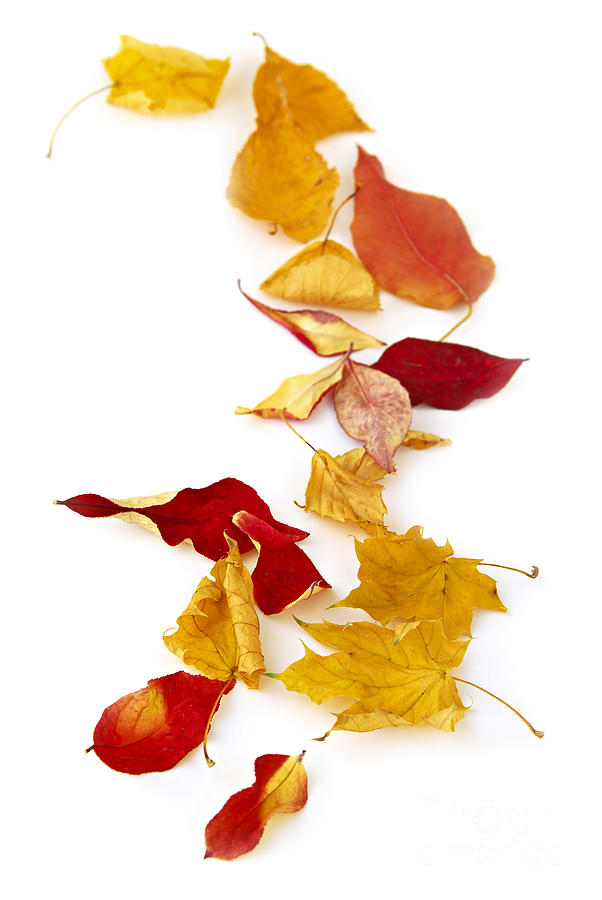 Autumn Photograph - Autumn Leaves by Elena Elisseeva