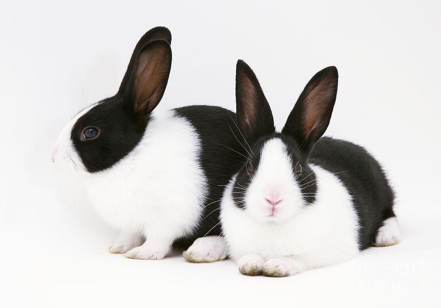 Rabbits Company  Jessica Goedhart