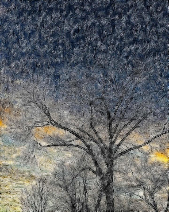 Sky Photograph - Bare Limbs by Misty Blankenship