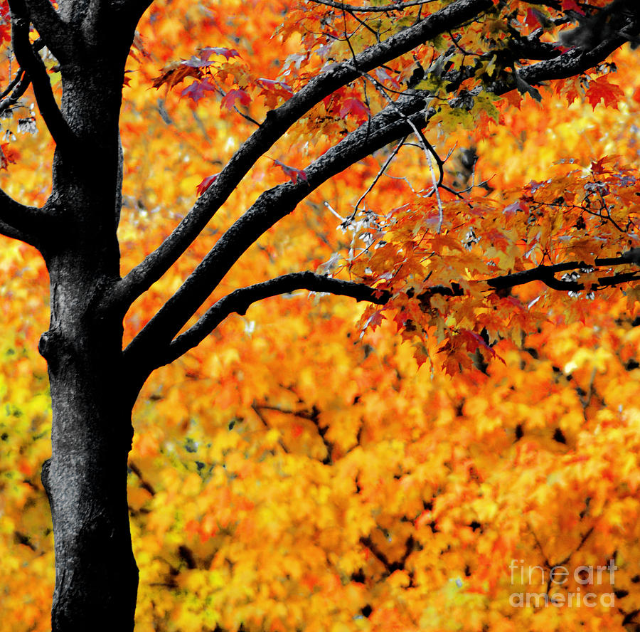 Fiery Orange Leaves Photograph - Blaze by Optical Playground By MP Ray