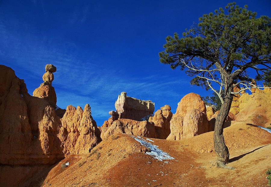 Bryce Canyon Utah by Sheila Kay McIntyre