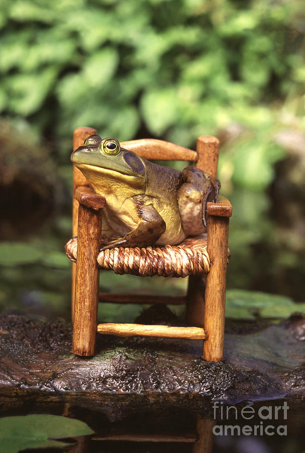 Chair Photograph - Bullfrog by Kenneth H Thomas and Photo Researchers