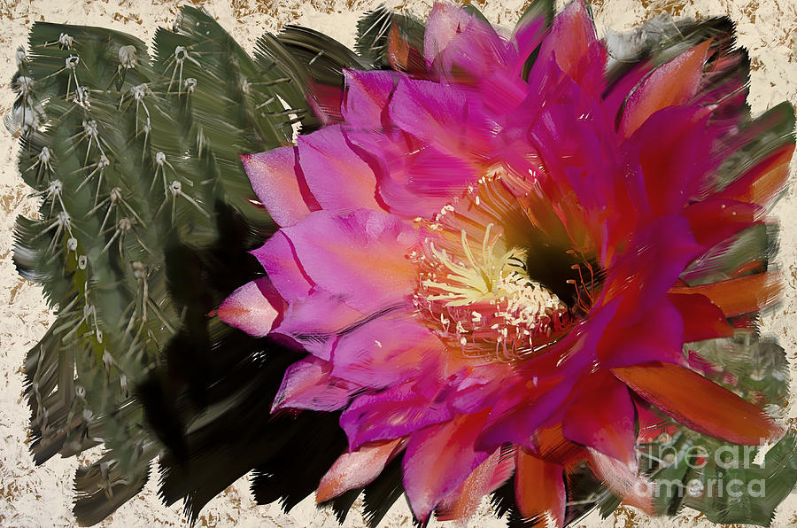 Cactus Photograph - Cactus Flower  by Jim And Emily Bush