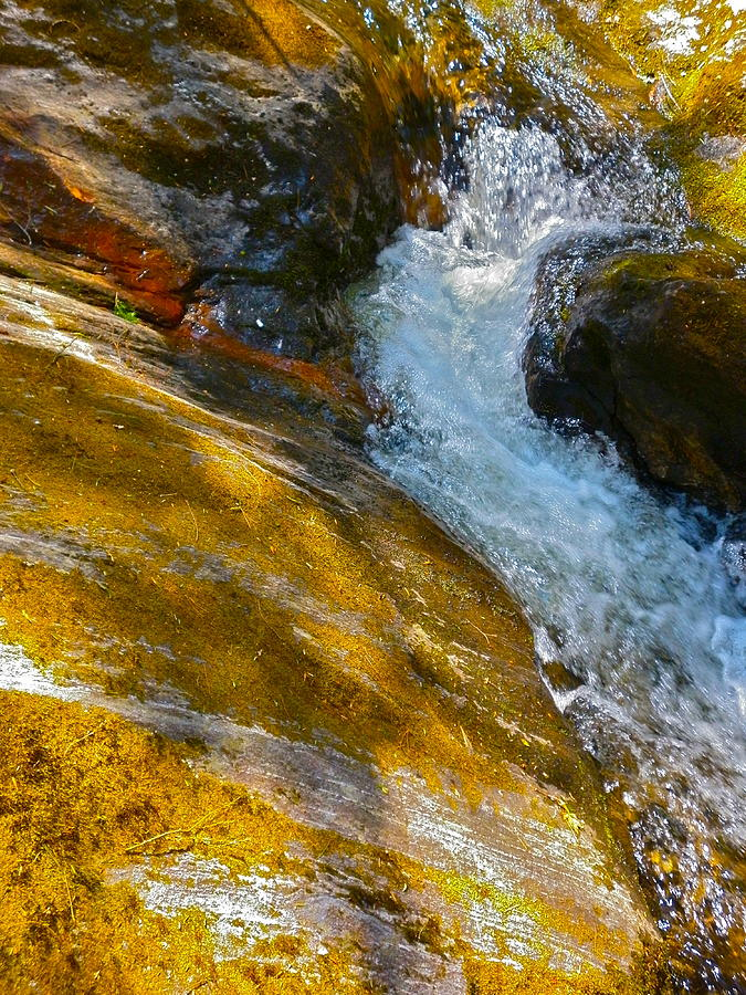 Landscape Photograph - Childs Brook Close Up by George Ramos