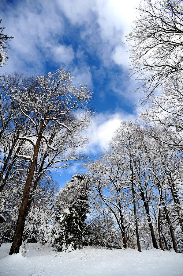 Snow Photograph - Cook Estate by Frank DiGiovanni