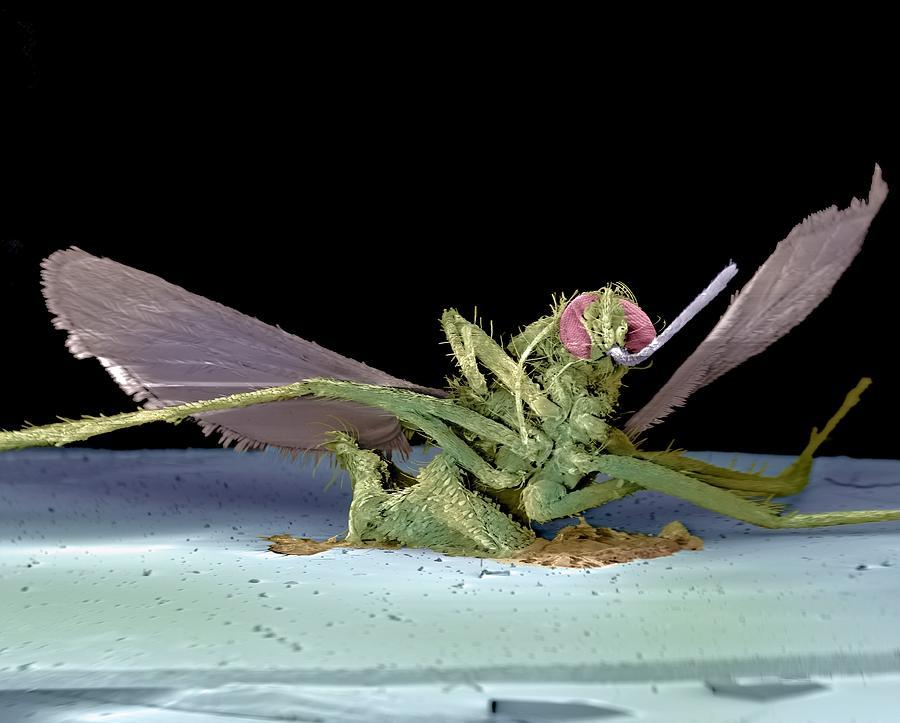 Fly Photograph - Dead Fly, Sem by Volker Steger