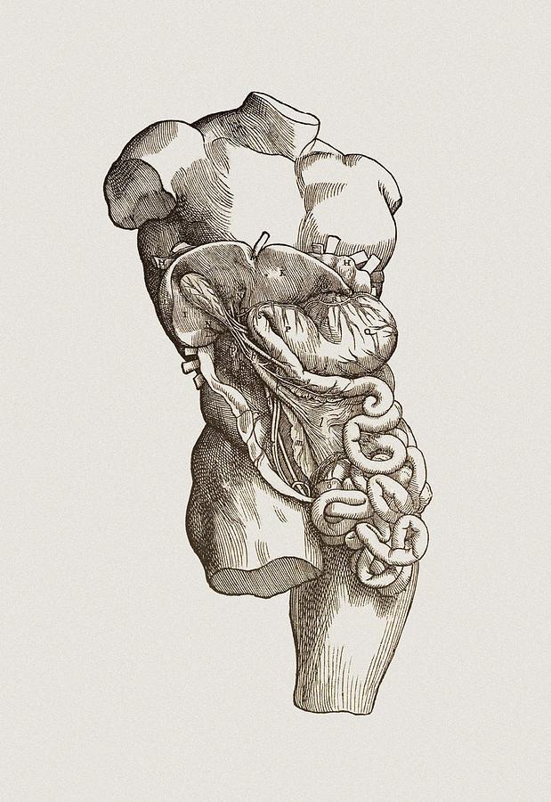 Gallbladder Photograph - Digestive System by Mehau Kulyk