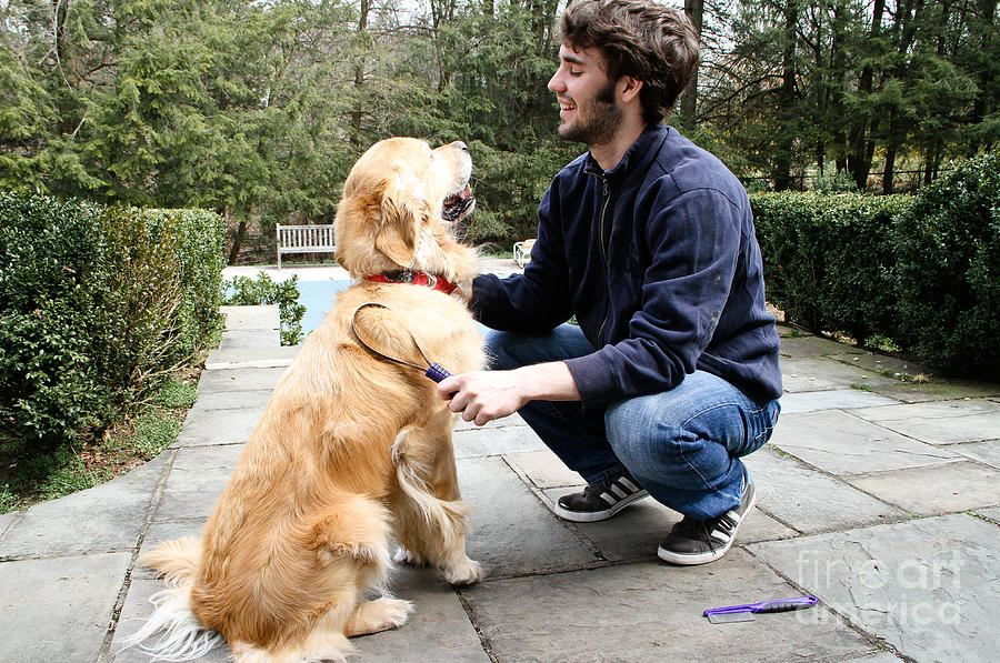 Golden Retriever Photograph - Dog Grooming by Photo Researchers, Inc.