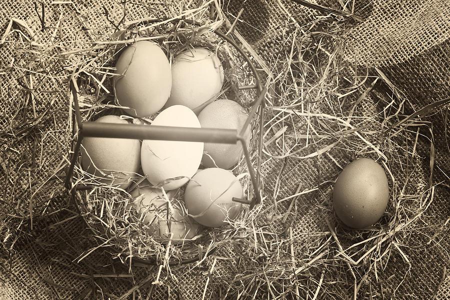 Eggs Photograph - Eggs by Joana Kruse
