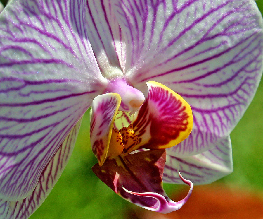 Ribet Photograph - Exotic Orchids Of C Ribet by C Ribet