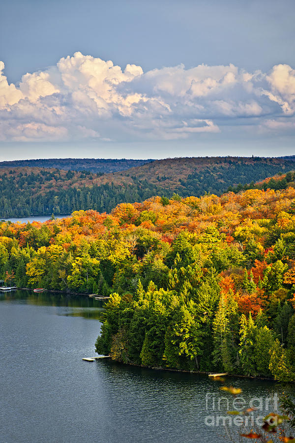 Forest Photograph - Fall Forest And Lake by Elena Elisseeva