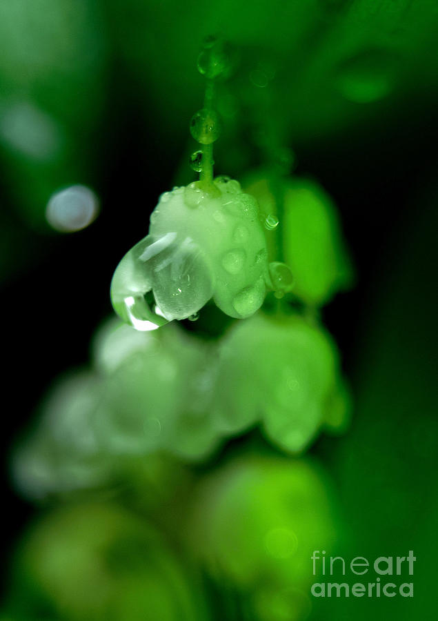 Nature Photograph - Flower And Drops by Odon Czintos