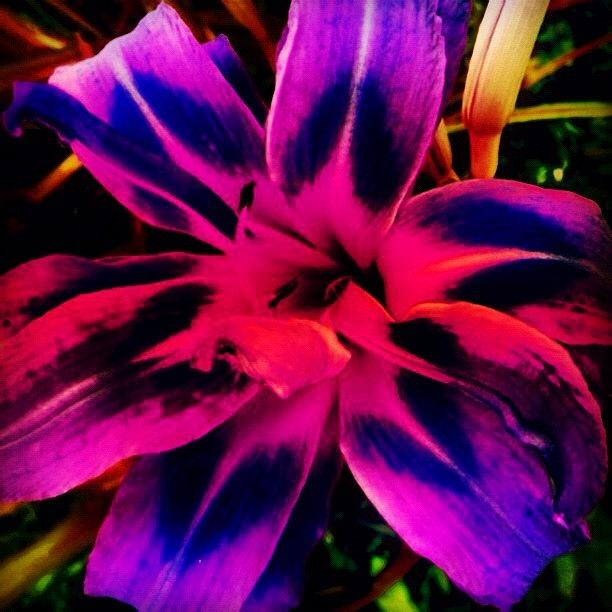 Summer Photograph - Flower by Katie Williams