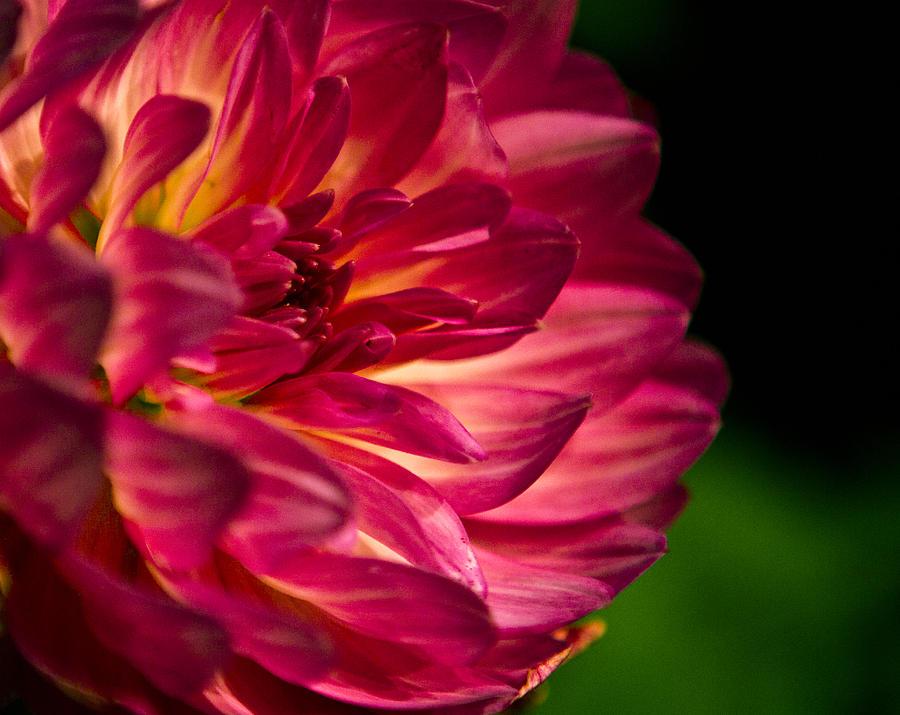 Flower Photograph - Flower by Milan Kalkan