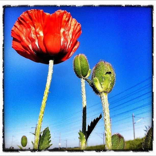 Instagram Photograph - Flowerpower Again by Urs Steiner