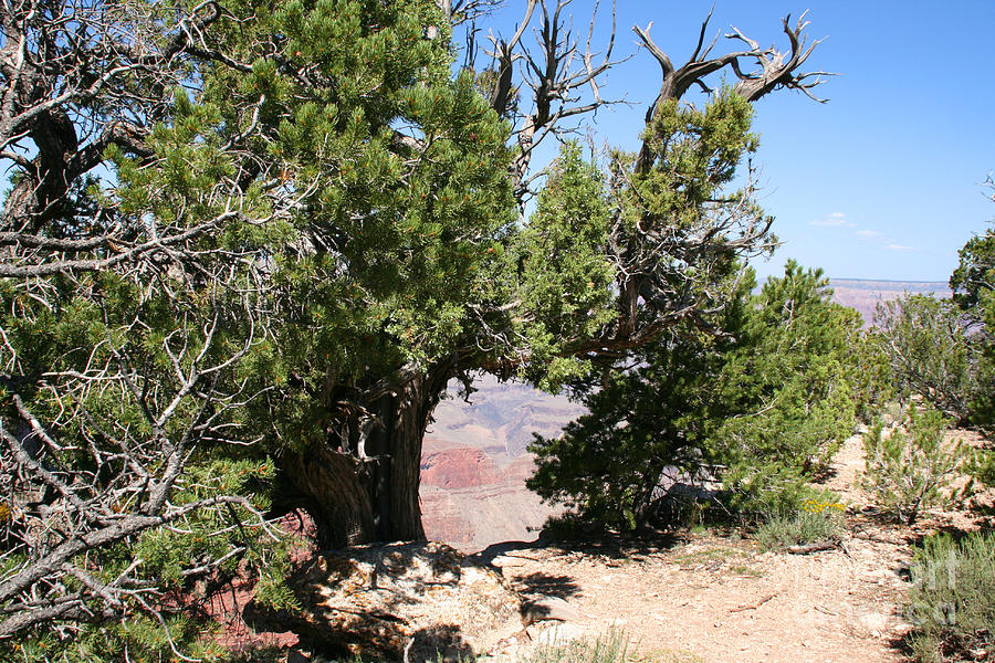 Adventure Photograph - Grand Canyon National Park Arizona Usa by Audrey Campion