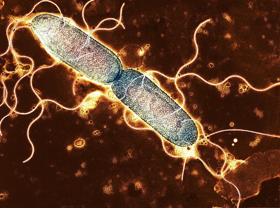 главное плохие бактерии картинки которые