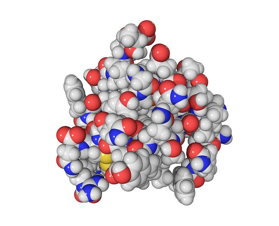 Insulin Photograph - Insulin Molecule by Laguna Design
