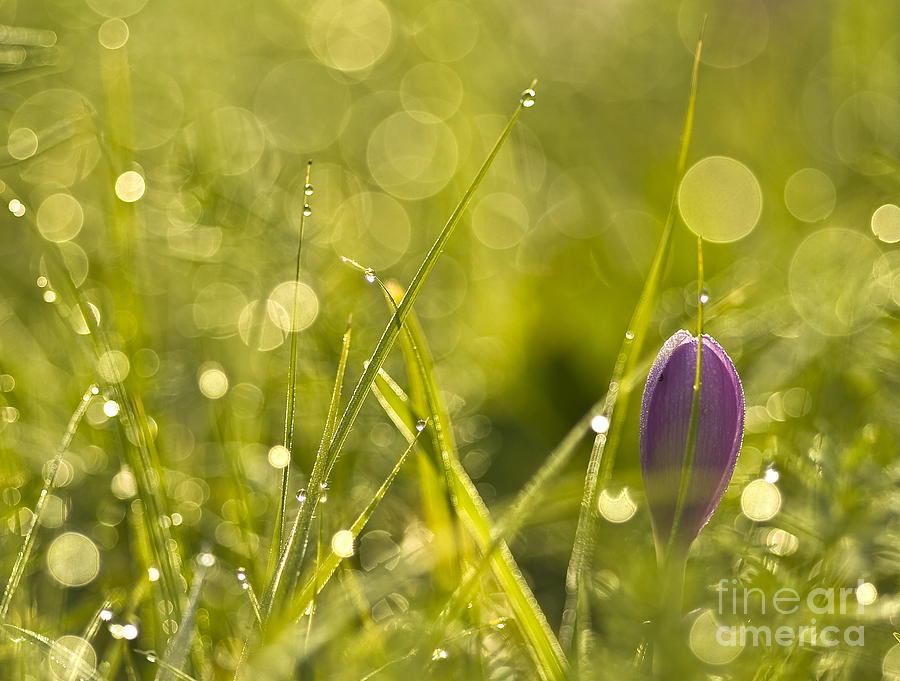 Background Photograph - Light Flowers by Odon Czintos