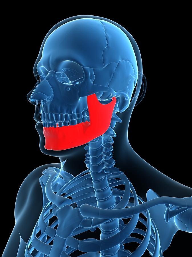 Lower Jaw Bone, Artwork Digital Art by Sciepro