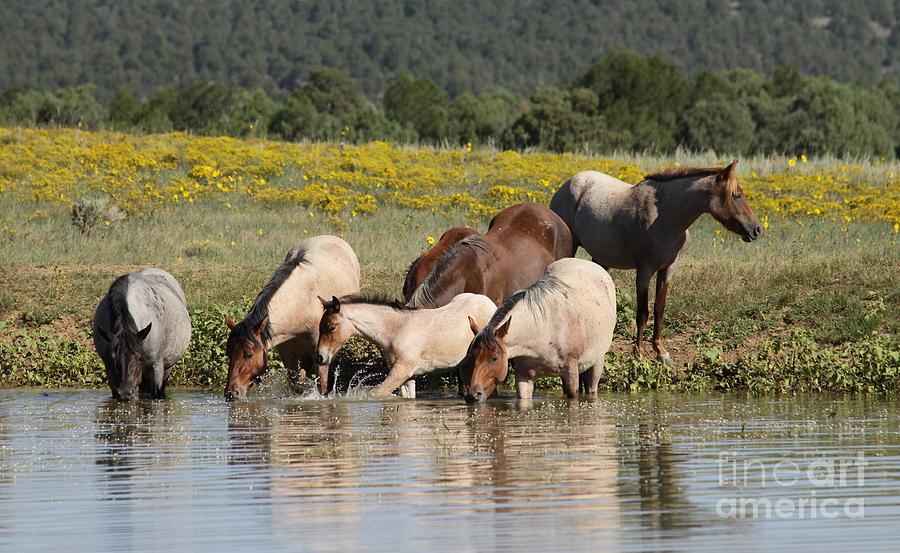 Mustang Photograph - Monero Mustangs by Lori Bristow