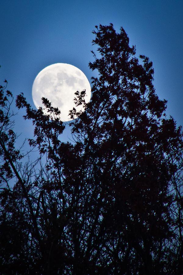 Nature Photograph - Moon Night by Jiayin Ma