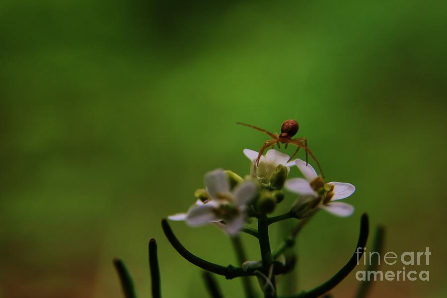 Insect Photograph - Mountains To Climb  by Neal Eslinger