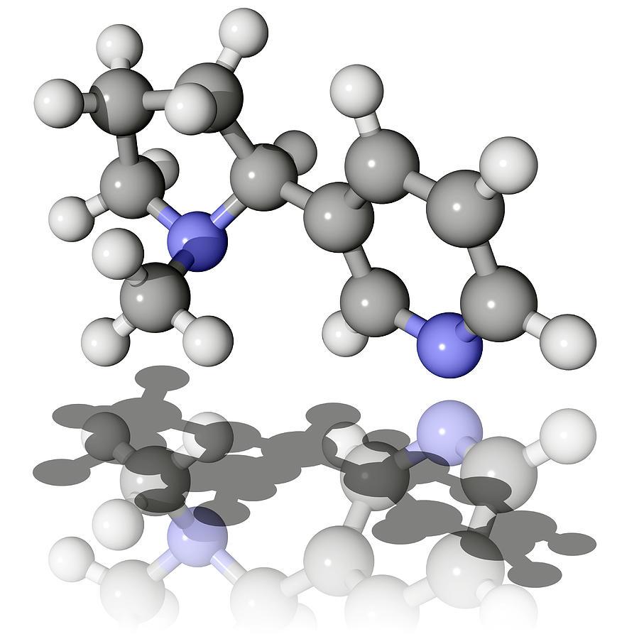 Nicotine Photograph - Nicotine Molecule by Laguna Design