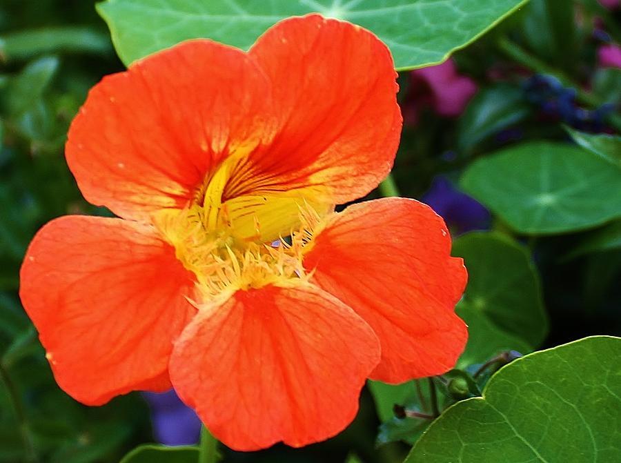Flora Photograph - Orange Delight by Bruce Bley