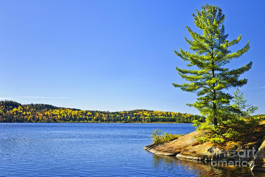 Lake Photograph - Pine Tree At Lake Shore by Elena Elisseeva