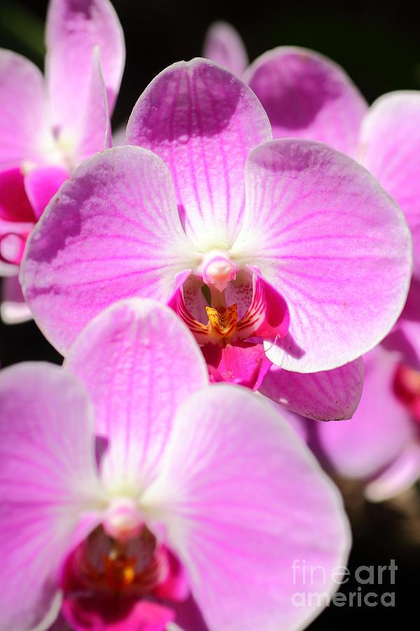 Pink Photograph - Pink  by Milena Boeva