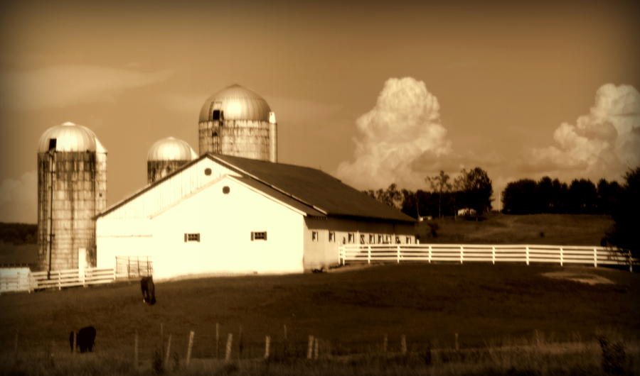 Barns Photograph - Cattle Farm Mornings by Karen Wiles