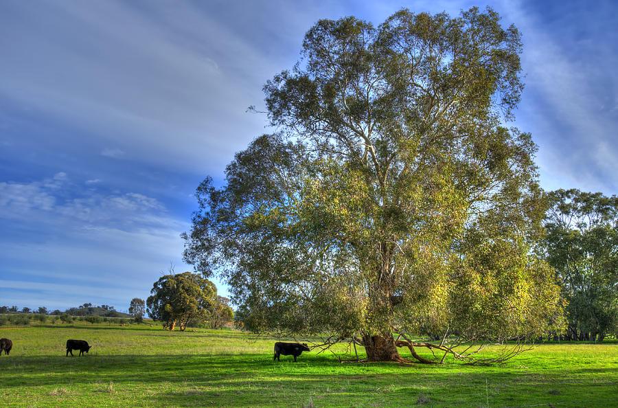 Australia Photograph - Rural Australia by Imagevixen Photography