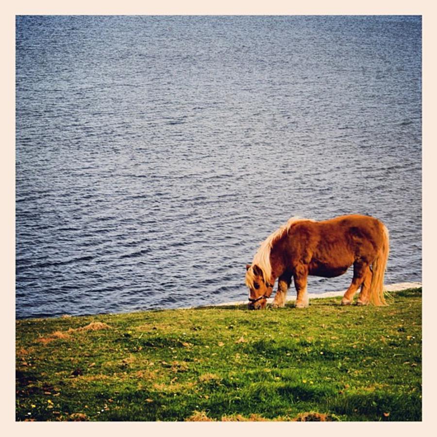 Shetland Photograph - Shetlands Pony by Luisa Azzolini