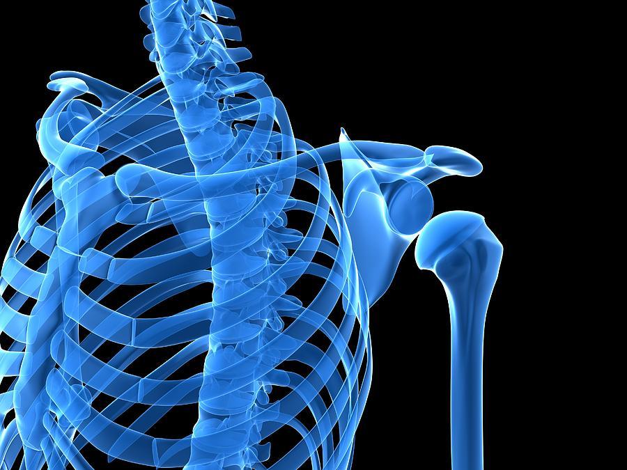 Artwork Photograph - Shoulder Bones, Artwork by Sciepro
