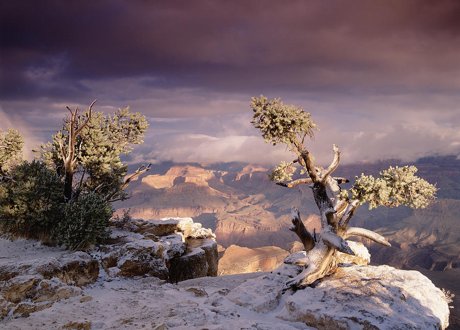 South Rim Of Grand Canyon Photograph by Tim Fitzharris