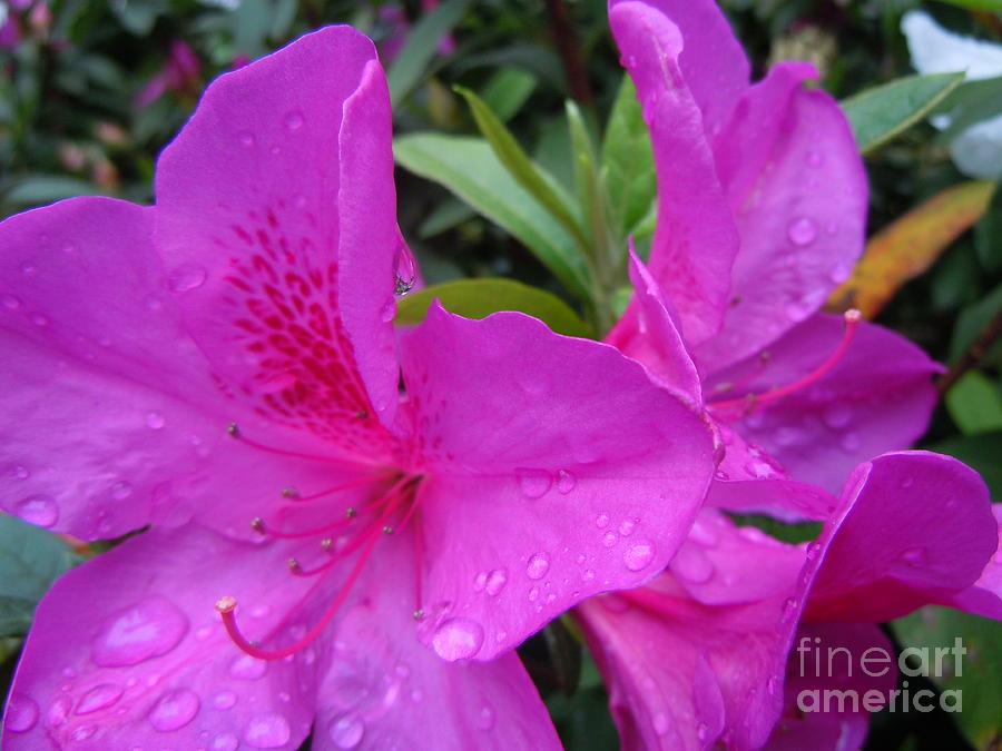 Photograph Painting - Spring Flowers by Lam Lam