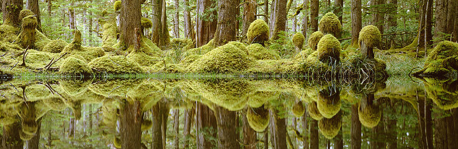 Aquatic Photograph - Swamp by David Nunuk