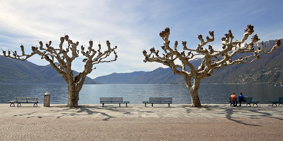 Tourism Photograph - sycamore trees in Ascona - Ticino by Joana Kruse