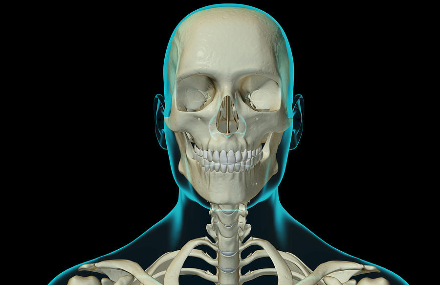 The Bones Of The Head And Neck Digital Art by MedicalRF.com