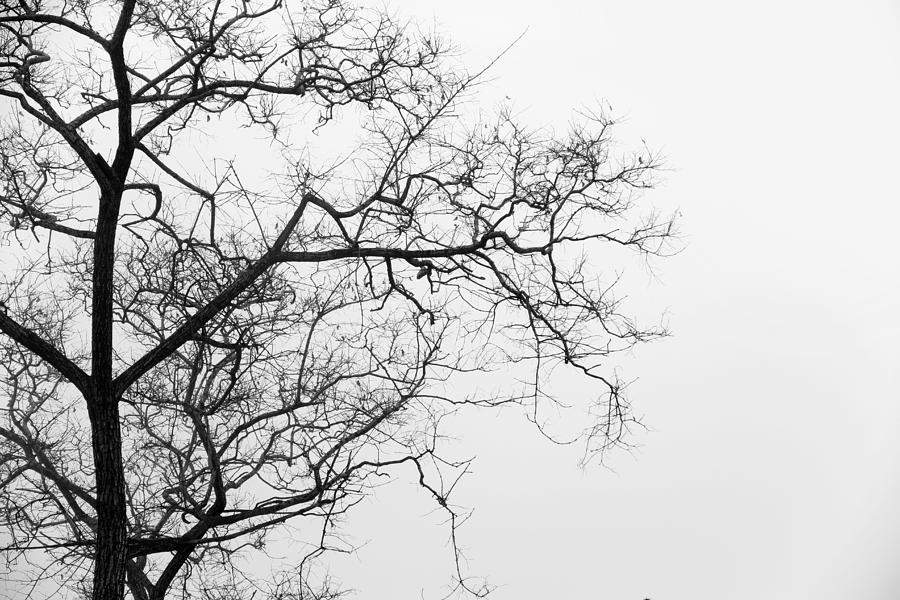 Tree Against A White Sky In The Early Morning Hours Photograph by Gal Ashkenazi