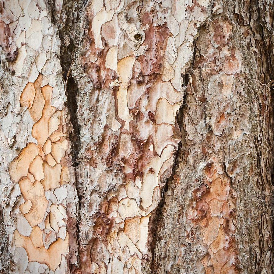 Background Photograph - Tree Bark by Tom Gowanlock
